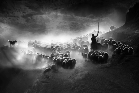 From the hard and dusty journey of sheep herd in Bitlis Turkey. I went to Bitlis to take photos in that city and take this in that period . Sheep has a great impartance in Bitlis. It was really hard to take these photos. Sheep has a great impartance in Bitlis.  This photo is like a pastoral symphony .  Copyright: © F. Dilek Uyar, Turkey, Winner, National Awards, 2020 Sony World Photography Awards