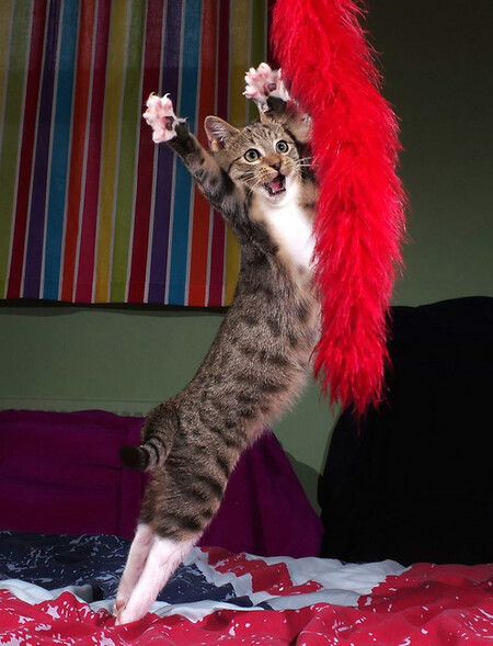 Iain Mcconnell The Dancing Kitten